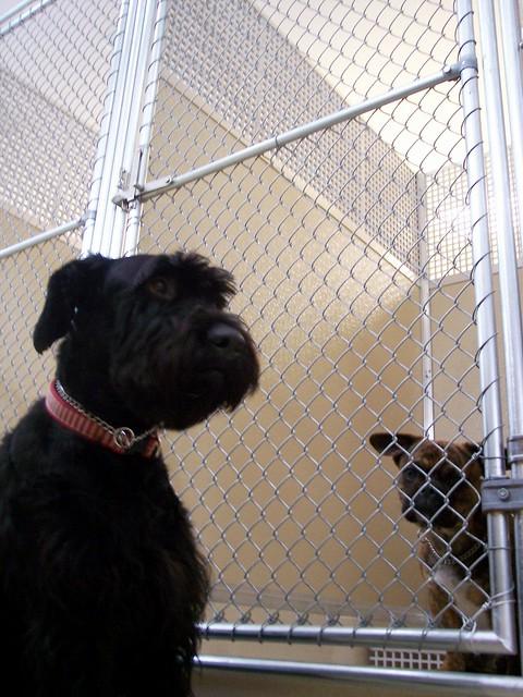 Image Result For Dog Training Mason