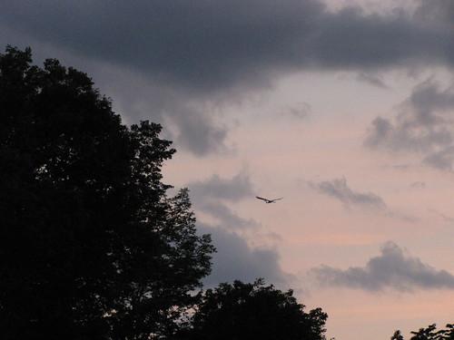 sunset sky clouds inflight kent connecticut greategret
