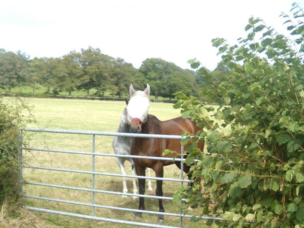 Who was that masked horse? Ockley to Warnham