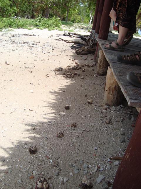 Cayo Blanco: Hermit Crabs