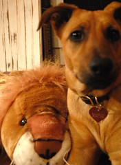 """""""What about me?"""" said the Lion to his friend Rosie"""
