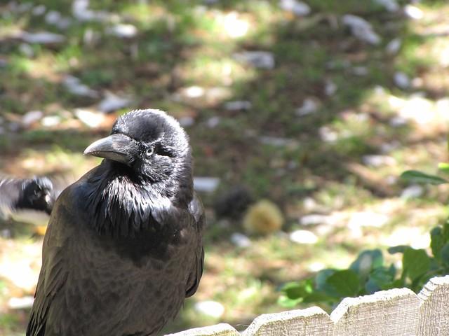 bird attack 1/5   Flickr - Photo Sharing! Papaya