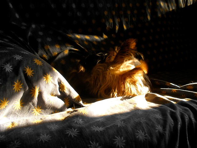Sleeping in Sun(s)