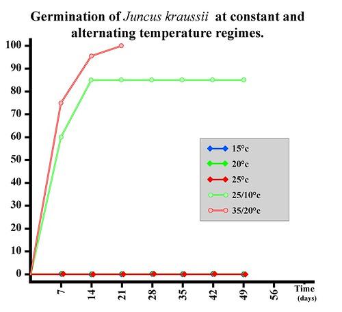 Germination of Juncus kraussii