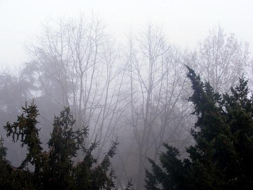 Cavenago la nebbia