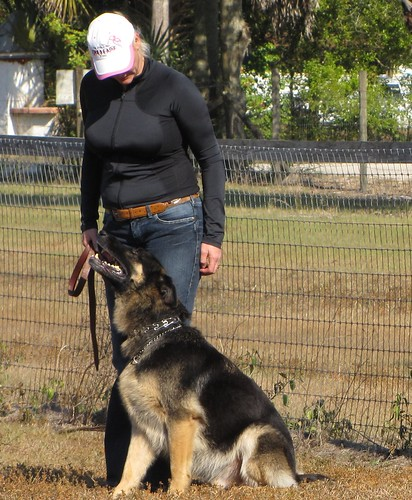 Everything You Ever Wanted To Know About Canine Training