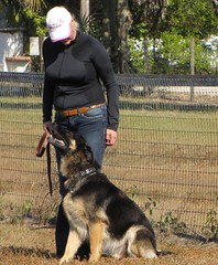 Make Dog Training Easy By Following These Tips. 2