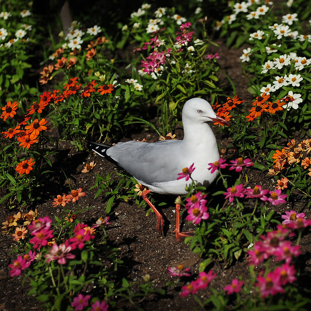 ~ A Seagull And Colorful Flowers ~