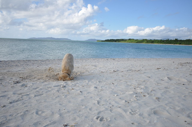 the dog at the Kondoi beach
