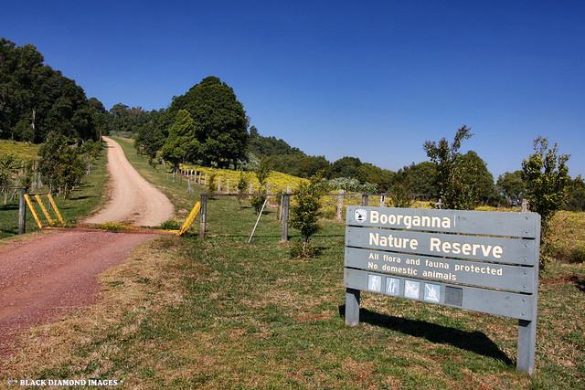 Boorganna Nature Reserve - Comboyne Plateau