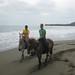 Horses on the Beach in Costa Rica by tylerkaraszewski