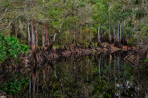 usa water florida hdr highdynamicrange dadecity greenswamp withlacoocheeriver