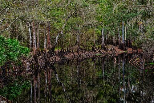 usa water florida hdr highdynamicrange dadecity greenswamp withlacoocheeriver