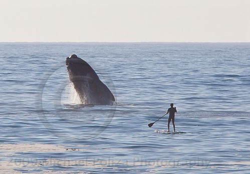 Whale Human encounter