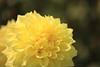 Photo:Flower / 花(はな) By TANAKA Juuyoh (田中十洋)