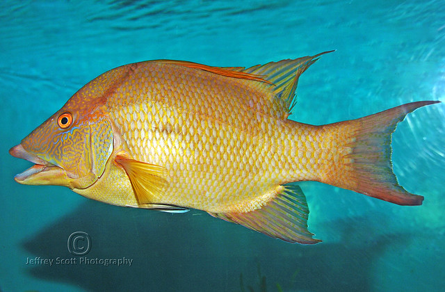 Pretty Fish At The Florida Aqurium Flickr Photo Sharing