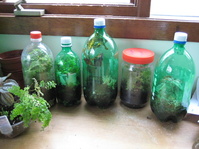 plastic bottle terrarium flickr photo sharing