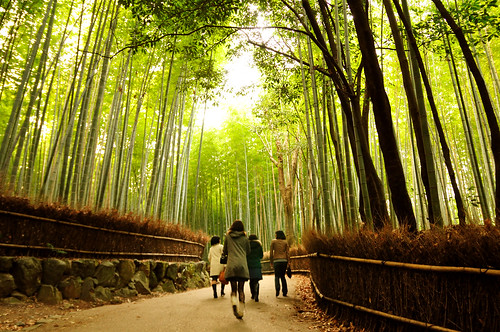 Bamboo forest 竹林の道_16