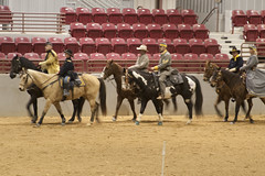 animal sports, western riding, equestrian sport, sports, western pleasure, charreada, pack animal, reining, traditional sport,