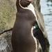 Woodland Park Zoo Seattle 060