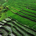 Rice Terrace | Ubud, Bali by Ping Timeout