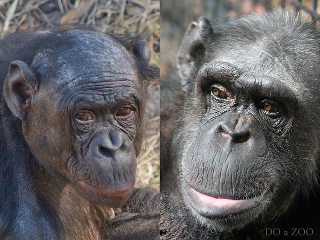 The Main Differences Between the Skulls of Humans & Chimps