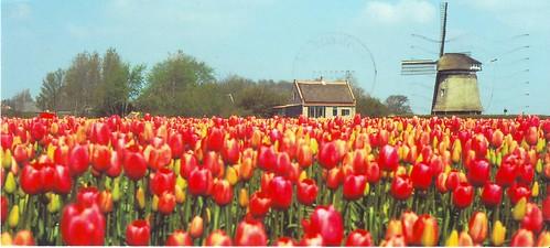 Netherlands NL-171084