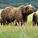 Mommy, can I have some?  Brown Bear Family