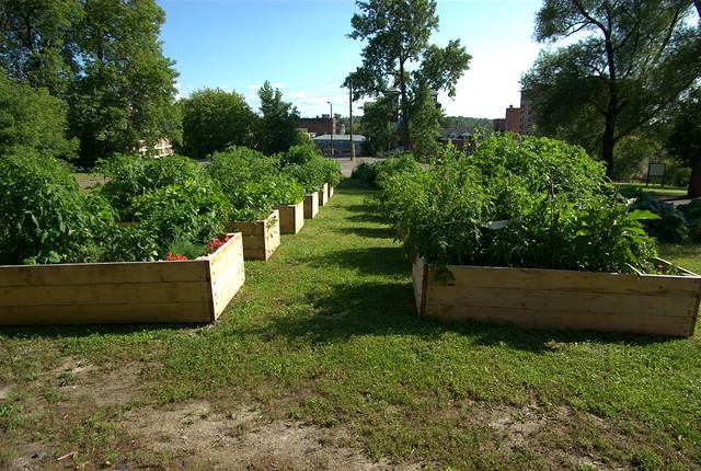 Sudbury Community Vegetable Gardens Flickr Photo Sharing