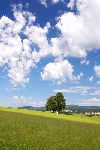 blue sky tree field cloudy wiese himmel baum münzkirchen munzkirchen