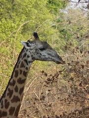 Zambia03SouthLuanga153