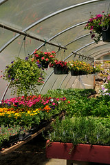 Sell Greenhouse Plants for Cash