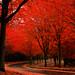 Scarlett and Crimson by ScenicScapes
