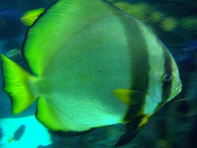 Rainforest Cafe Fish Tank