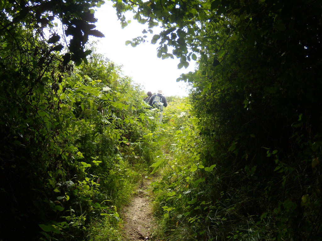 overgrown path East Grinstead Circular