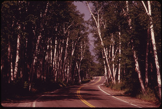 Route 2 Becomes A Graceful Avenue of Birches ... 06/1973