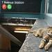 Subway Cat by iandavid