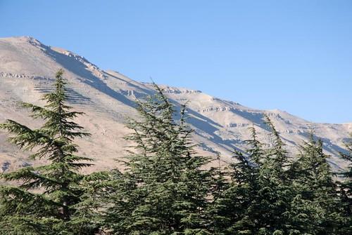 lebanon mountain tree water landscape nikon valley cedar d80 abigfave impressedbeauty flickrdiamond vosplusbellesphotos
