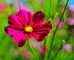 wildflower experiment 1.8