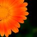 flower sun by abusx