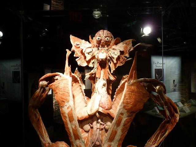 20100429 bodyworlds calgary - 12