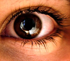 iris, brown, eyelash, eyelash extensions, close-up, eye, organ,