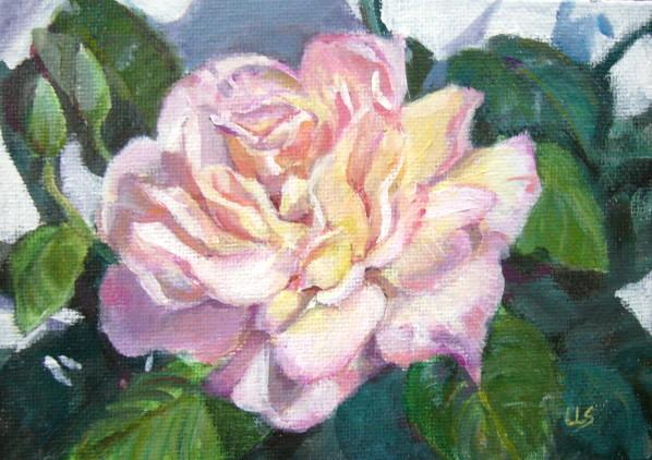 Garden Rose - plein, Panasonic DMC-LC50
