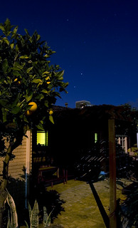 The Lemon Tree | by Luke Reed