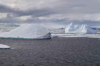 785 Antarctic Sound
