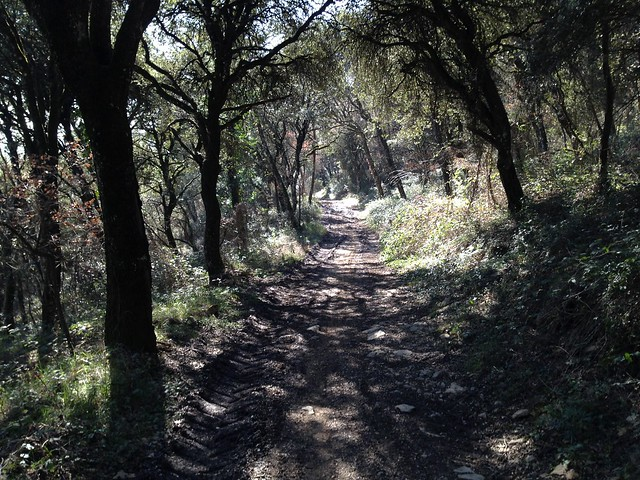 9Mar14-Camino Ariz-Olza