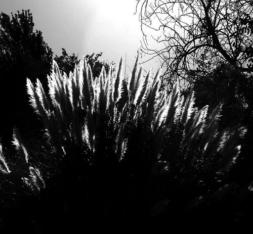 Enigmas - Pablo Neruda