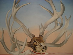 antler, deer, trophy hunting, horn, drawing, illustration,