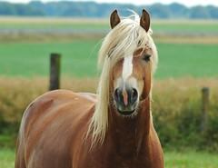 colt(0.0), foal(0.0), grazing(0.0), animal(1.0), prairie(1.0), mane(1.0), mare(1.0), stallion(1.0), grass(1.0), mammal(1.0), horse(1.0), fauna(1.0), mustang horse(1.0), meadow(1.0), pasture(1.0), grassland(1.0),