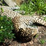 Woodland Park Zoo Seattle 015